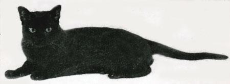 Best All American Cat - Mizpah's Clancy