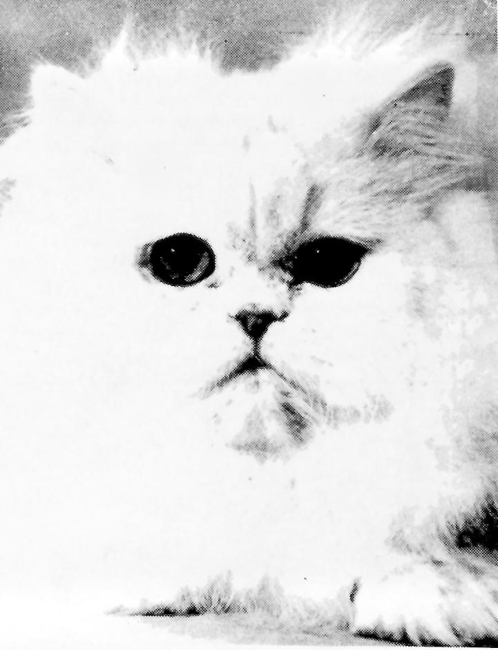 1963 COTY - Azulita's Paleface